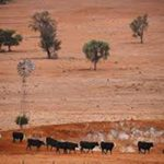 Farmland suffering from drought